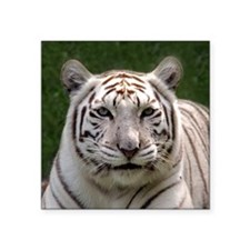 """White Tiger 006 Square Sticker 3"""" x 3"""""""
