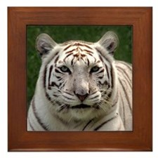 White Tiger 006 Framed Tile