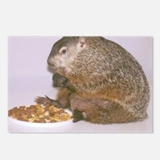 Groundhog Postcards (Package of 8)