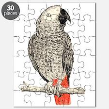 African Grey in Pencil Puzzle