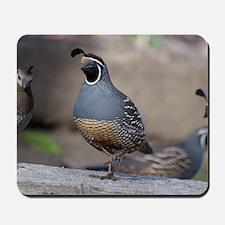 quail_greet_card Mousepad