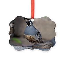 quail_greet_card Ornament