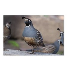 quail_greet_card Postcards (Package of 8)