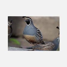 quail_greet_card Rectangle Magnet