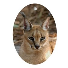 CaracalBCR030 Oval Ornament