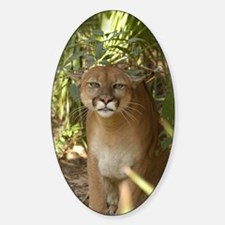 Cougar 002 Sticker (Oval)
