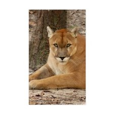 Cougar 003 Decal