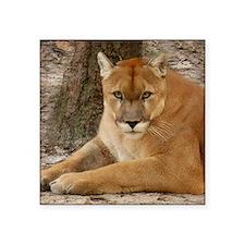 """Cougar 003 Square Sticker 3"""" x 3"""""""