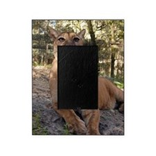 Cougar 009 Picture Frame