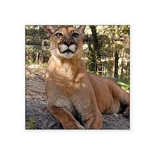 """Cougar 009 Square Sticker 3"""" x 3"""""""