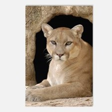 Cougar 014 Postcards (Package of 8)