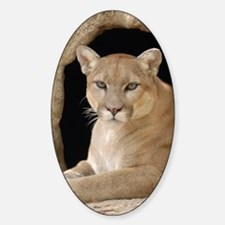Cougar 014 Decal