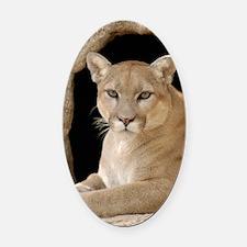 Cougar 014 Oval Car Magnet