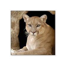"""Cougar 014 Square Sticker 3"""" x 3"""""""
