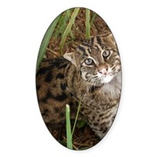 FishingCat001 Decal