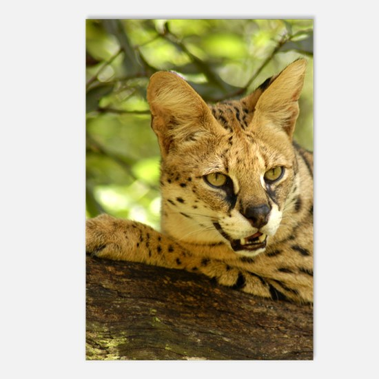 serval 010 Postcards (Package of 8)