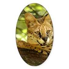 serval 010 Decal