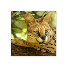 "serval 010 Square Sticker 3"" x 3"""