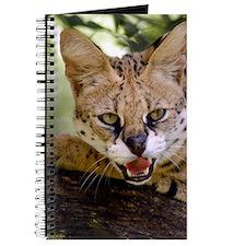 serval 013 Journal