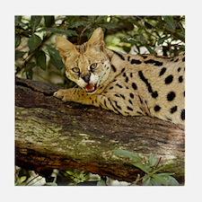 serval 014 Tile Coaster