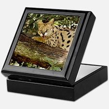 serval 014 Keepsake Box