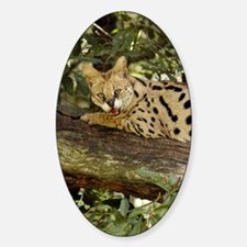 serval 014 Decal