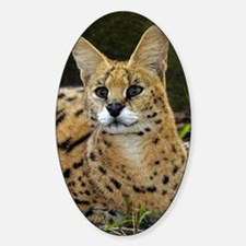 serval 015 Decal