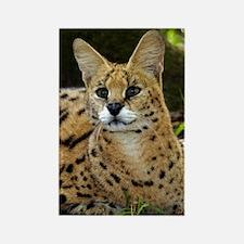 serval 015 Rectangle Magnet