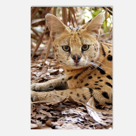 serval 025 Postcards (Package of 8)