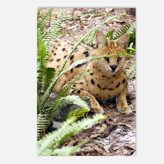 serval 047 Postcards (Package of 8)