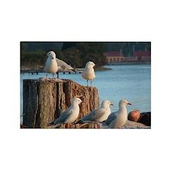 Seagulls Rectangle Magnet