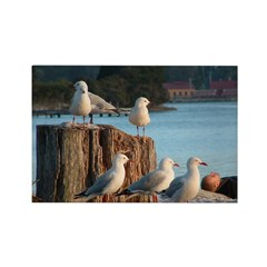 Seagulls Rectangle Magnet (100 pack)
