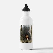 Red Fox in a Tree Water Bottle