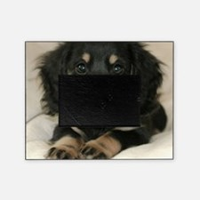 long hair black doxie 16x16 Picture Frame