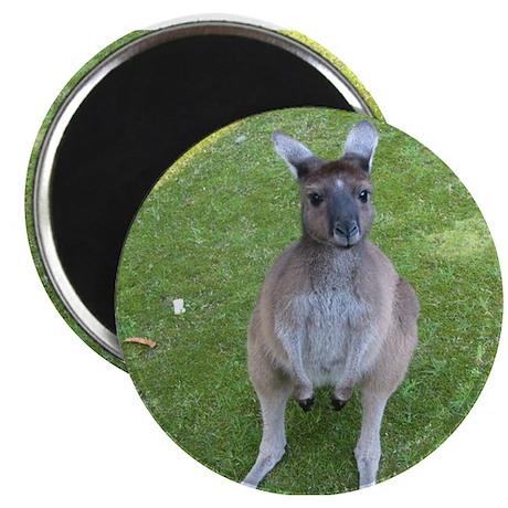 """Baby Kangaroo 2.25"""" Magnet (100 pack)"""