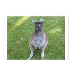 Baby Kangaroo Postcards (Package of 8)