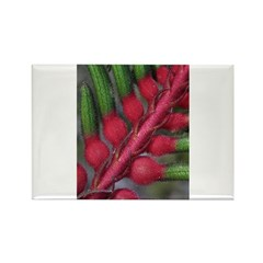 Red kangaroo Paw Rectangle Magnet (100 pack)