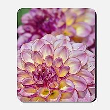 Beautiful pink dahlia flowers Mousepad