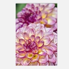 Beautiful pink dahlia flo Postcards (Package of 8)