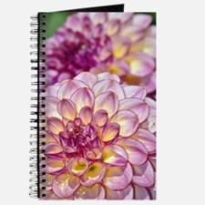 Beautiful pink dahlia flowers Journal