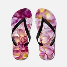 Beautiful pink dahlia flowers Flip Flops