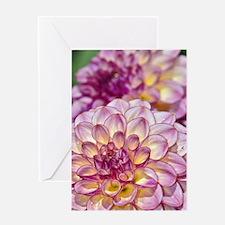 Beautiful pink dahlia flowers Greeting Card