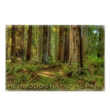 redwoods Postcards (Package of 8)