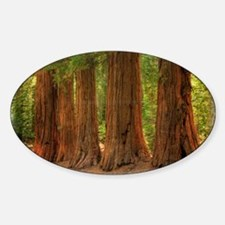 SEQUOIA Decal
