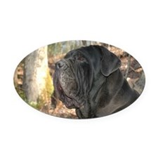 PugsSpringBox Oval Car Magnet