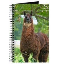 blk_llama_card Journal