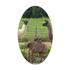 llamatrio2_iphone3G Oval Car Magnet
