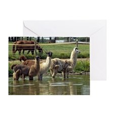 llamatrio1_calendar Greeting Card