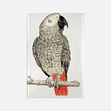 African Grey in Pencil Rectangle Magnet