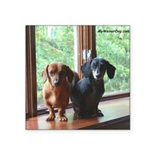 "dasie and harley window sea Square Sticker 3"" x 3"""